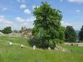 Kosenie na Šarišskom hrade zorganizoval Klub ľudových tradícií z Veľkého Šariša