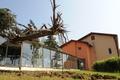 spadnutý strom na ZŠ vo Veľkom Šariši (foto: TASR)